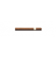 Davidoff Ambassadrice - Pack of 10
